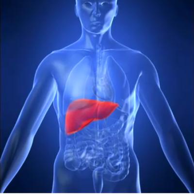 6 razones por las que debería prestarle atención a su hígado