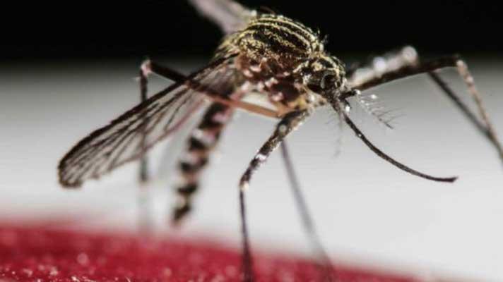 Llega el fin de la emergencia sanitaria por zika en Brasil