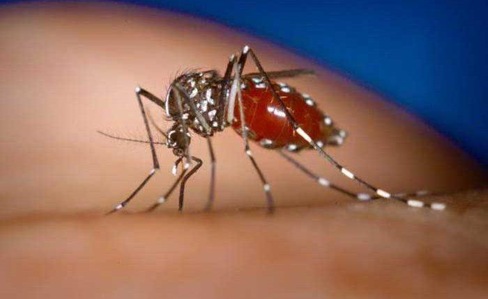 Campaña contra el dengue