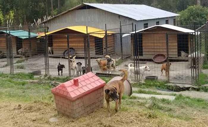 Preocupación por desalojo de animales en Cuenca