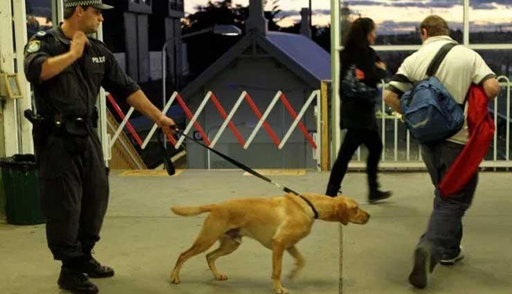 Perro, Amigo del Hombre, Detector,