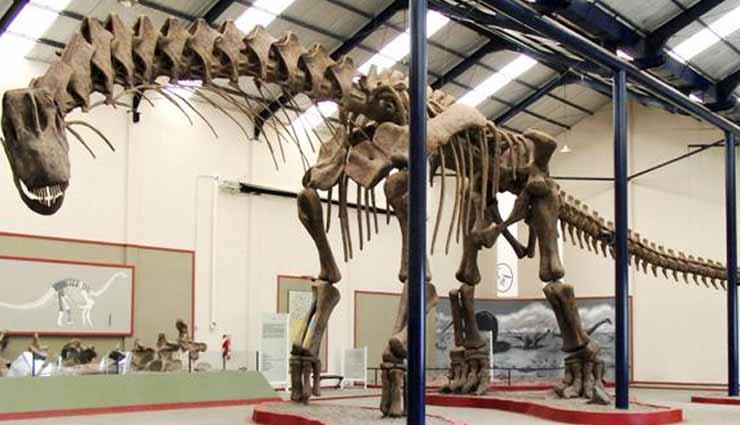 dinosaurio, especie, argentina, descubrimiento,
