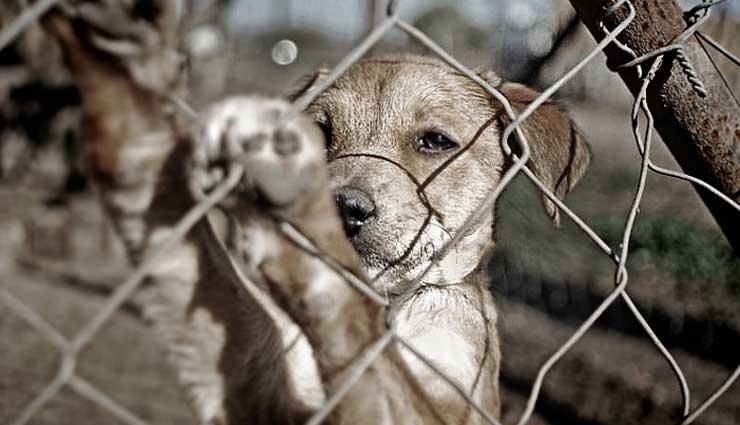 COIP, Maltrato Animal, Prisión, Justicia
