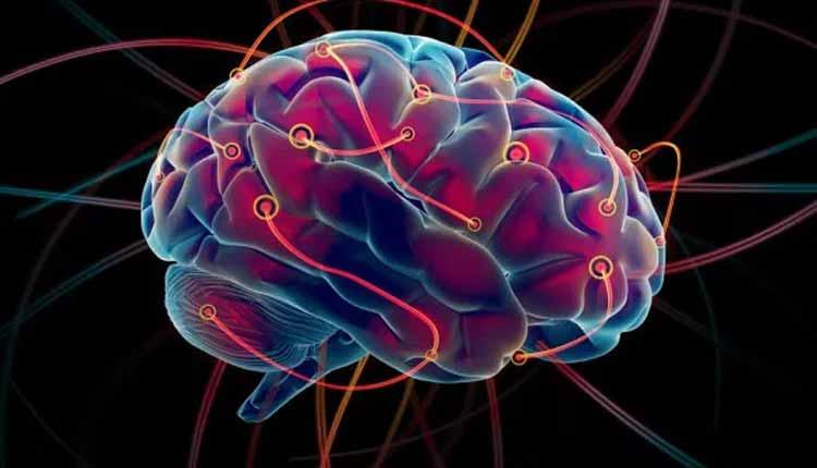 Cerebro_Humano, Ciencia, Estudios Científicos,