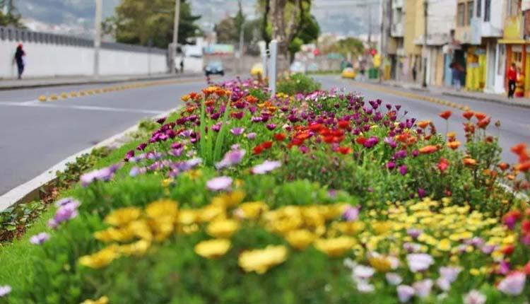 Ambato, Ecuador, Flores y Frutas,