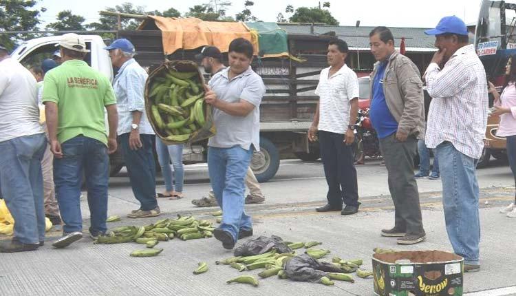 Plátanos, Productores, Santo Domingo de los Tsachilas, Paro,