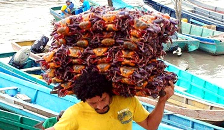 La plancha de cangrejos se vendió, entre 40 a 60 dólares en Guayaquil