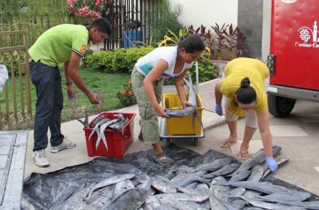 Finaliza la veda del pez Dorado