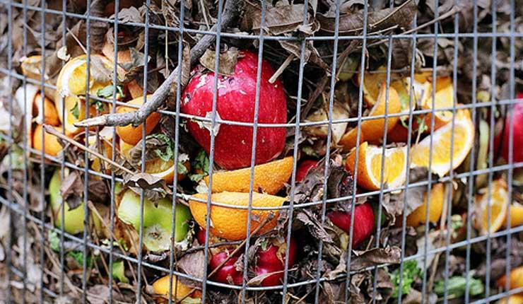 Aplicación española vela por el rescate de los alimentos condenados a la basura